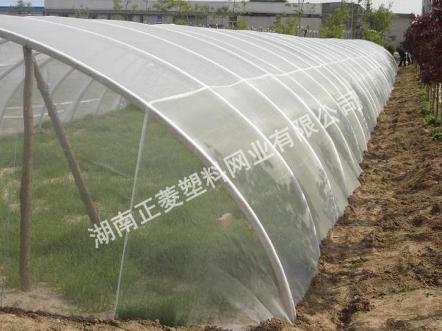 河北石家庄订购草药防虫网案例