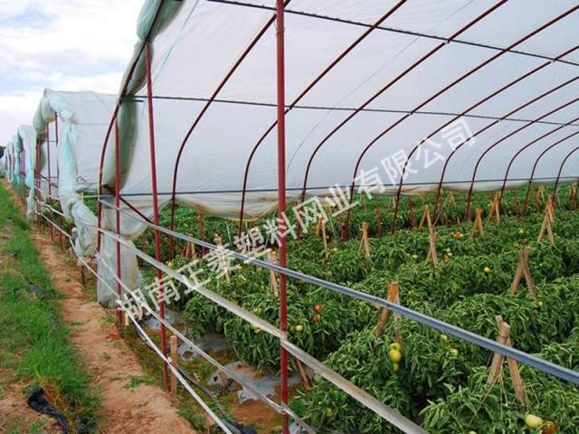 湖南岳阳华容县蔬菜种植基地订购防虫网案例