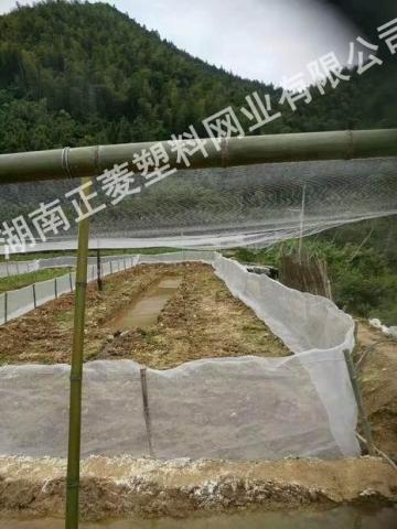 湖南岳阳泥鳅基地防鸟网案例